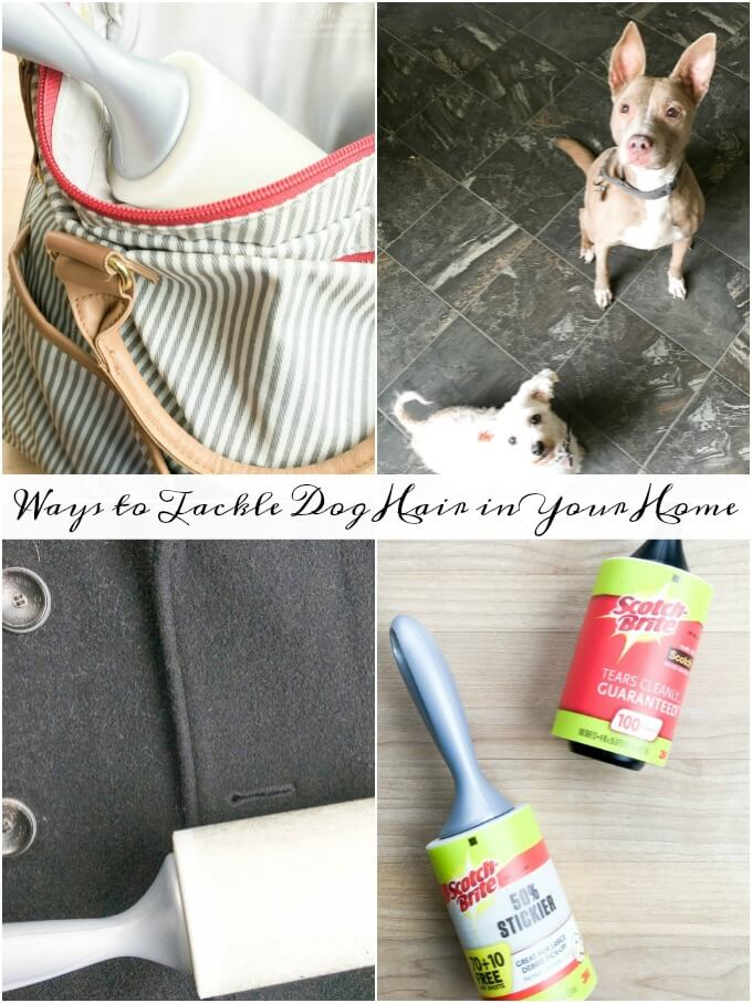 ? Ways to Tackle Dog Hair in Your Home: Check out some Ways to Tackle Dog Hair in Your Home and see how we use Scotch-Brite™ Lint Rollers to help us get the job done! Dog hair complementary of my dogs Cayli & Chloe! #ad #StickItToLint #CollectiveBias @ScotchBrite