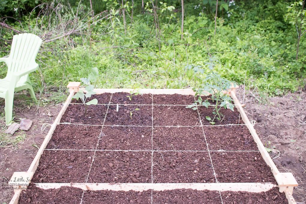20. In the raised-garden vegetable bed   Spring Garden Update Week of 5.22.2017 www.lifeslittlesweets.com