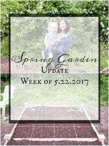 Spring Garden Update Week of 5.22.2017 www.lifeslittlesweets.com