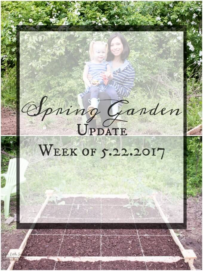 Spring Garden Update Week of 5.22.2017 www.lifeslittlesweets.com