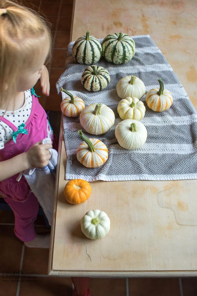 September Garden Update - Mini Pumpkins