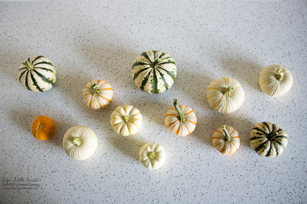 September Garden Update - Mini Pumpkins