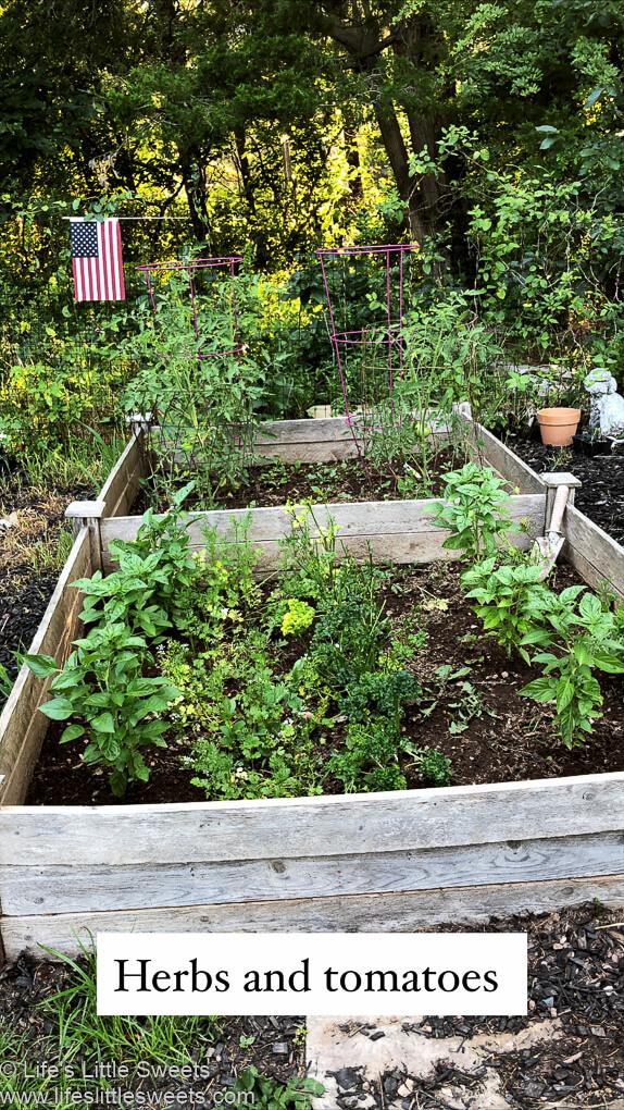 Garden Update July 2020