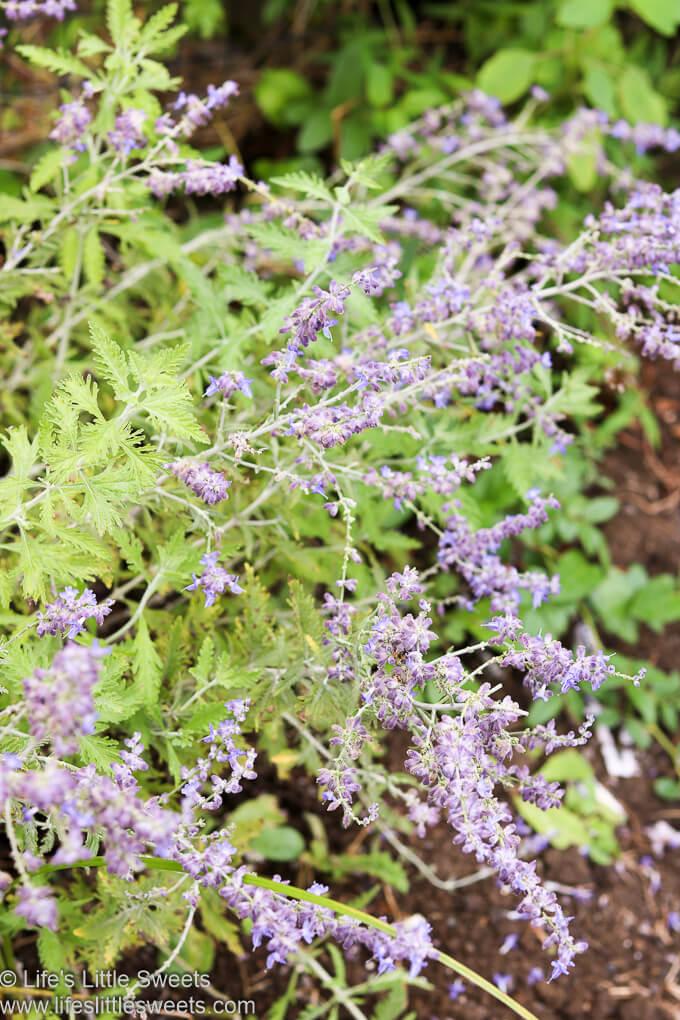 Garden Update August 2020