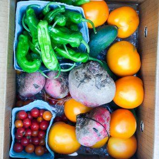 Organic CSA Share Box Week 6
