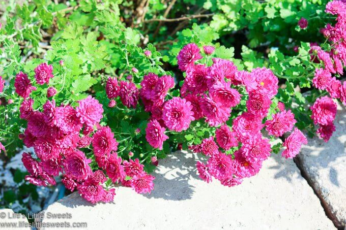 Garden Update September 2020