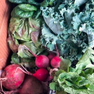 Organic CSA Share Box Week 8