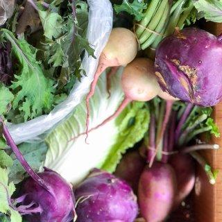 Organic CSA Share Box Week 9